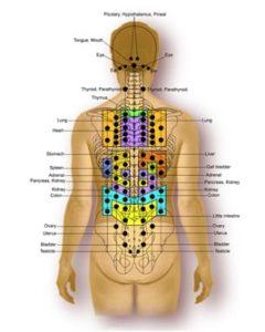 spinal nerve reflex points