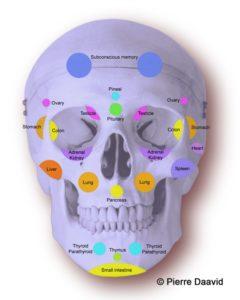 Face reflex points