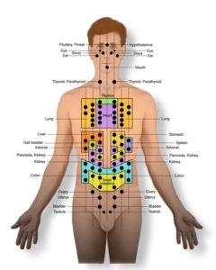 Front Body Reflex points