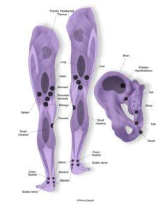 Leg and Iliac Bone Reflex Points
